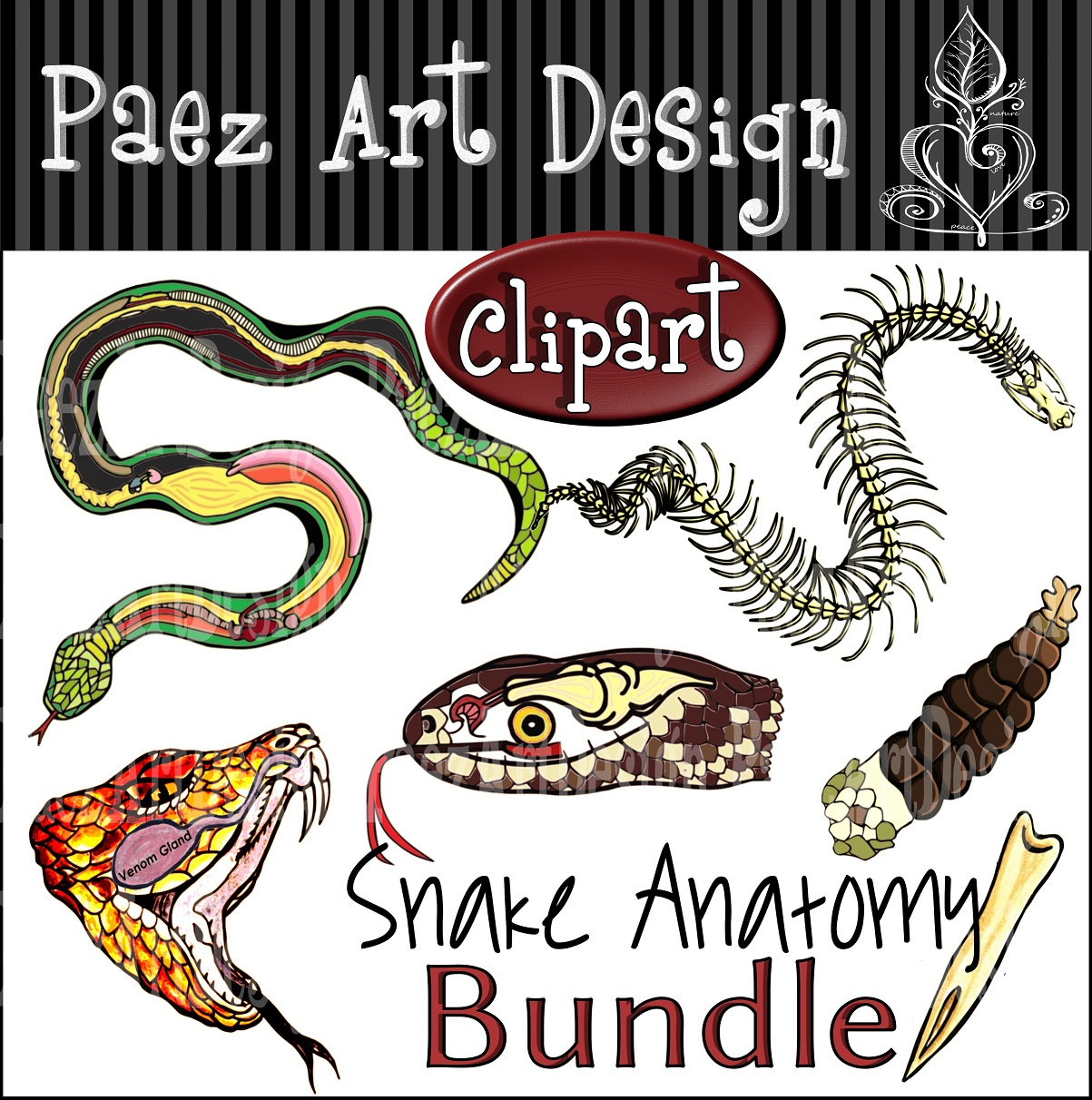 Snake Anatomy Clipart Bundle from Paez Art Design